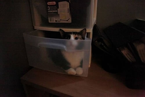 20 Cats Who Fail At Playing Hide And Seek 5