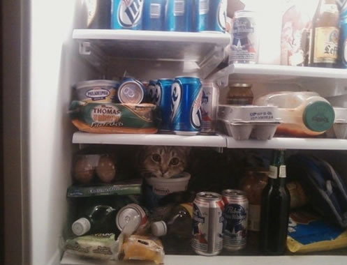 20 Cats Who Fail At Playing Hide And Seek 7
