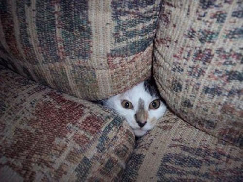 20 Cats Who Fail At Playing Hide And Seek 9
