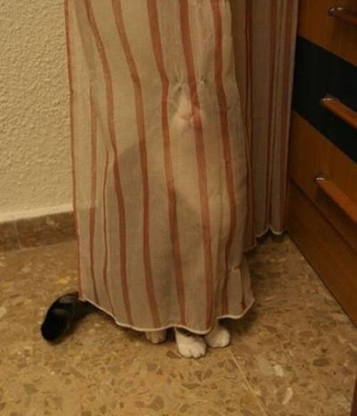 40 Cats Who Fail At Playing Hide And Seek 1
