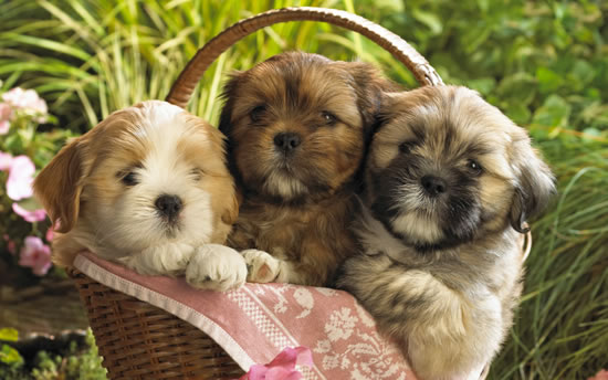 Bonus cutest pups in the world sent in by our readers (2)