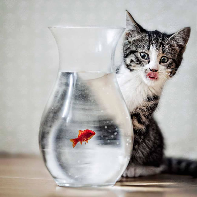 10 cute cats fishing for fish voltagebd Images
