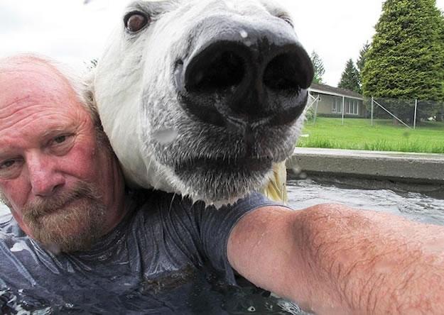 Crazy Man SwimS With His Pet Polar Bear (2)