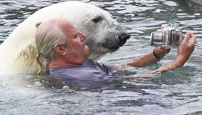 Crazy Man Swimming With Polar Bear (1)