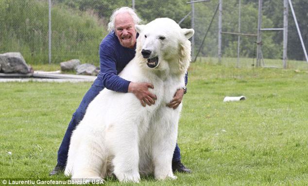 Crazy Man Swimming With Polar Bear (3)