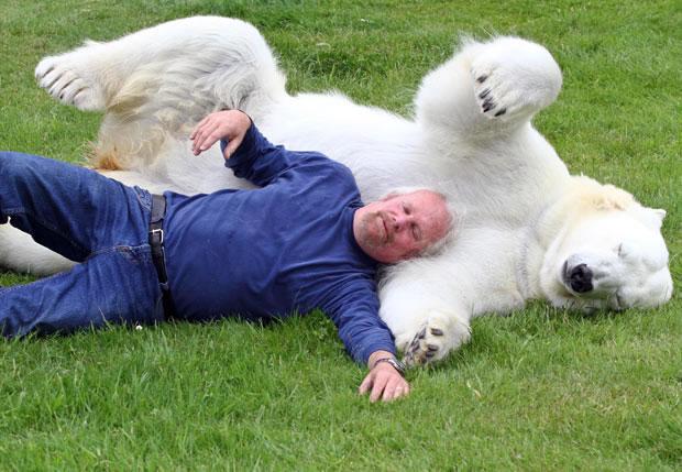Crazy Man Swimming With Polar Bear (4)