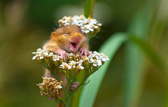 cute tiny animals that you want to put in your pocket 20