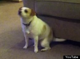 Dog Dancing To Eminem Shake That Goes Viral On Youtube
