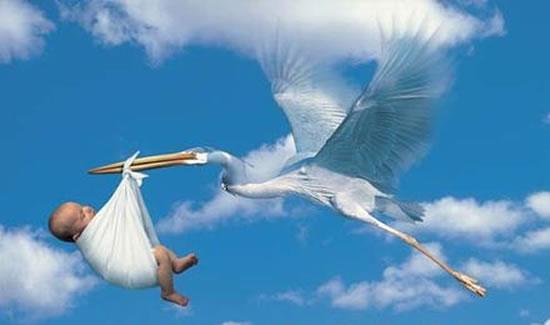 Why Storks Deliver Babies