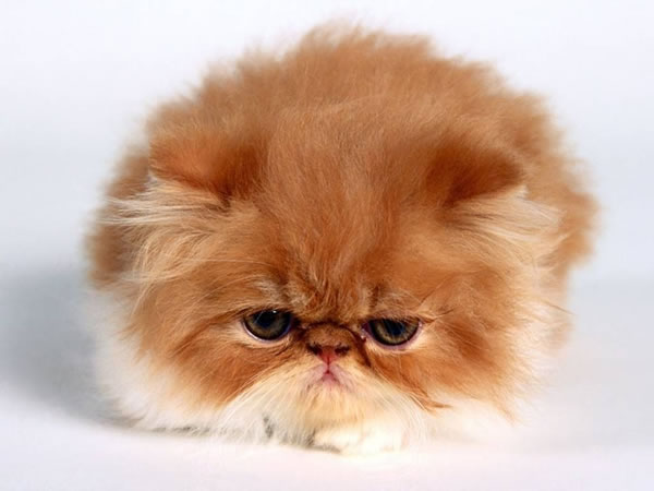 Angry Animals Google Search: Top 10 Cutest Baby Animals Who Wants One?