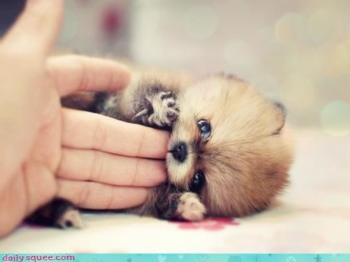 Top 10 Cutest Baby Animals Who Wants One?