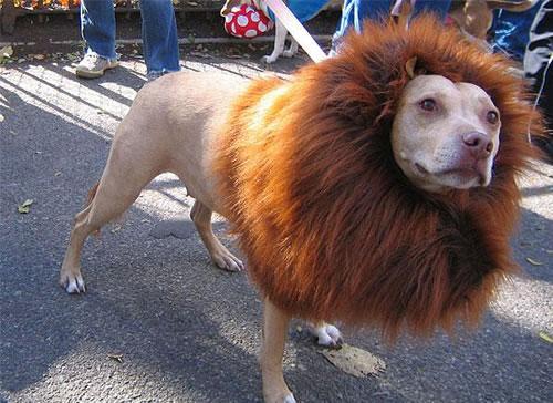 crazy dog costumes 10