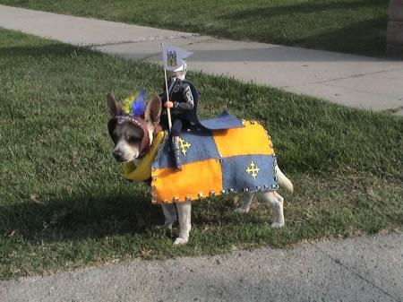 crazy dog costumes 11