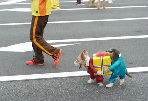 crazy dog costumes 12