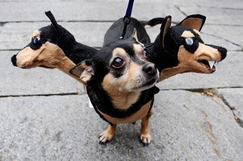crazy dog costumes 13