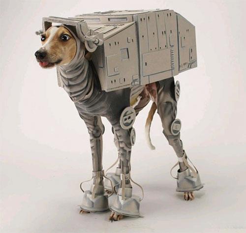 crazy dog costumes 14