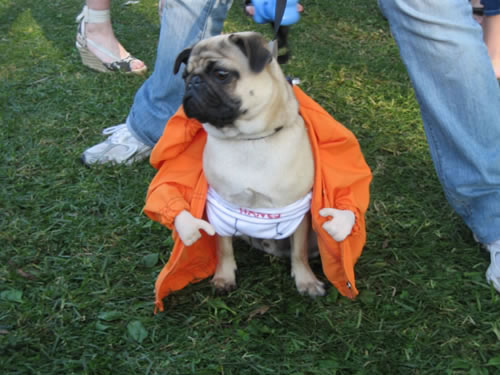 crazy dog costumes 15