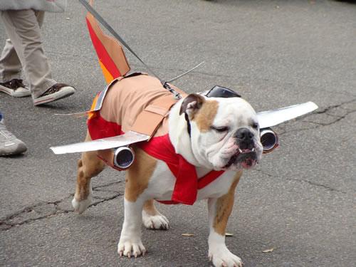 crazy dog costumes 17
