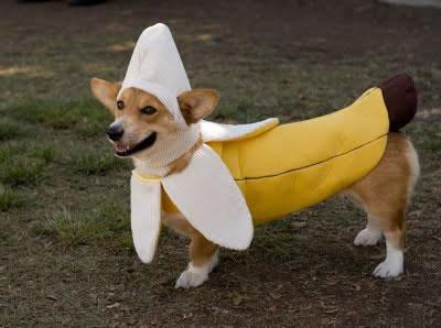 crazy dog costumes 18