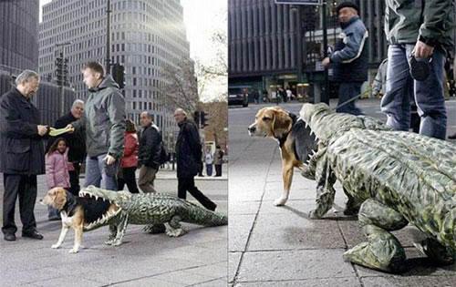 crazy dog costumes 20