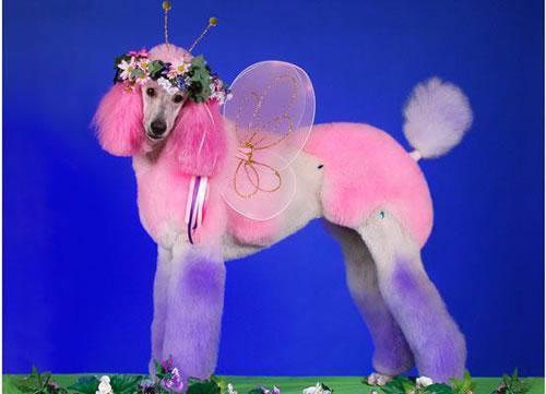 crazy dog costumes 3