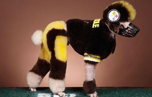 crazy dog costumes 6