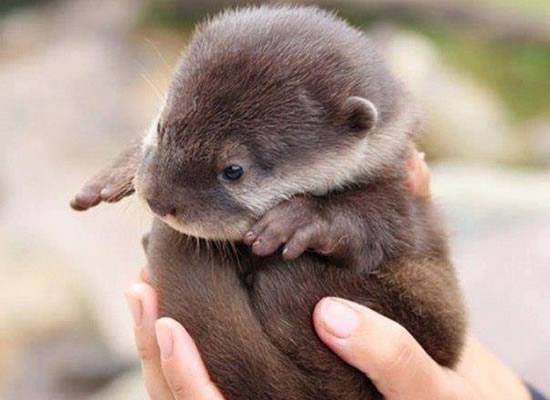 10 Cutest Baby Animals Ever You Want To Put In Your Hand - photo#21