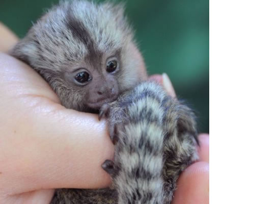 10 Cutest Baby Animals Ever You Want To Put In Your Hand