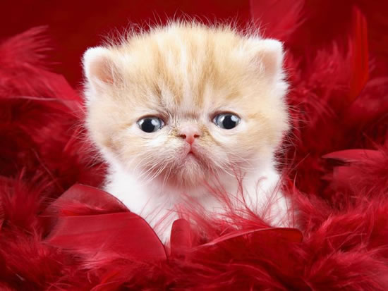 cutest kittens in the world (10)
