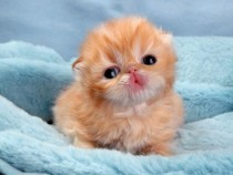 Top 10 Cutest Kittens In The World