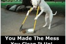 Dog Cleaning Up His Own Mess – Picture Of The Day