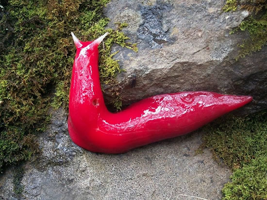 giant fluorescent pink slugs