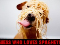 Guess Who Loves Spaghetti?