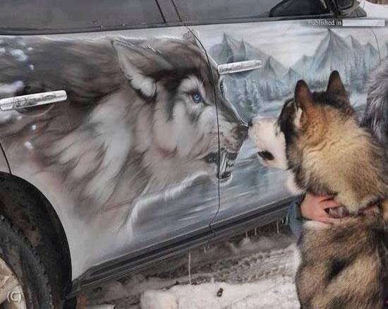 husky vs wolf
