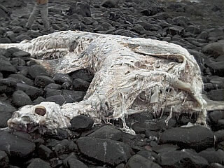 more strange animals washed up on beaches around the world (6)