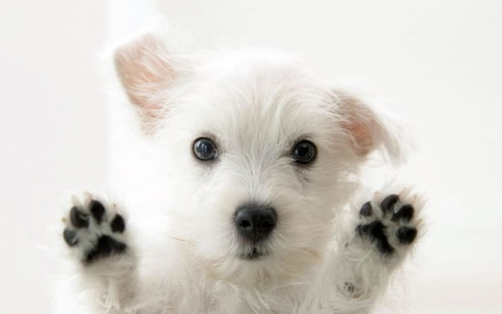 top 10 cutest puppies in the world (10)