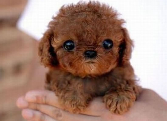 top 10 cutest puppies in the world  4 Cutest Puppies In The World 2013