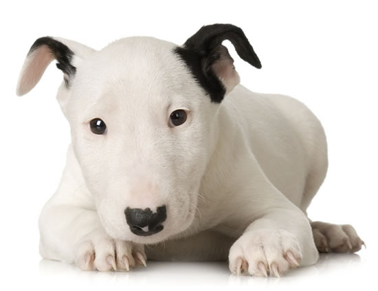 top 10 cutest puppies in the world (9)