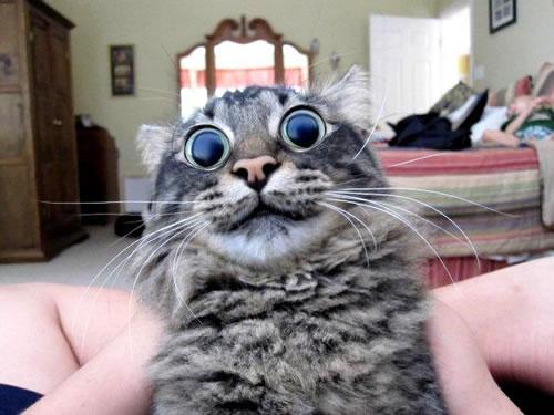 20 Funny Shocked Cat Memes 11