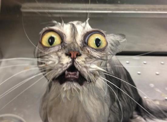 20 Funny Shocked Cat Memes 16
