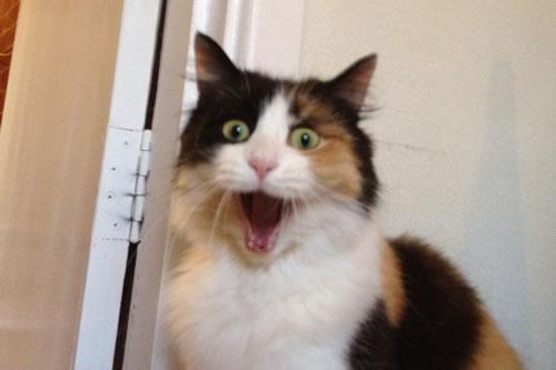 20 Funny Shocked Cat Memes 17