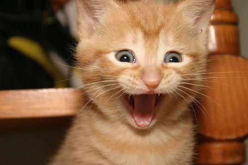 20 Funny Shocked Cat Memes 18