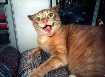 20 Funny Shocked Cat Memes 19