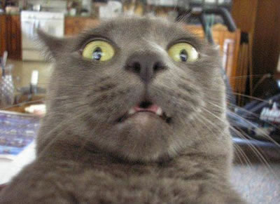 20 Funny Shocked Cat Memes 21