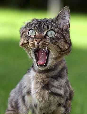 20 Funny Shocked Cat Memes 6