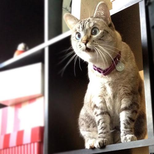 20 Funny Shocked Cat Memes 7
