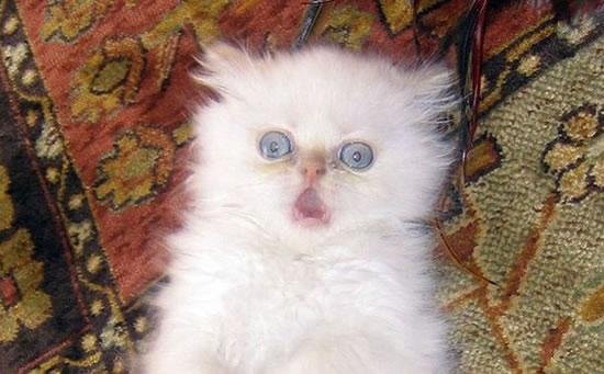 20 Funny Shocked Cat Memes 9