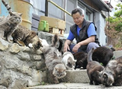 Tashirojima - Cat Island 2