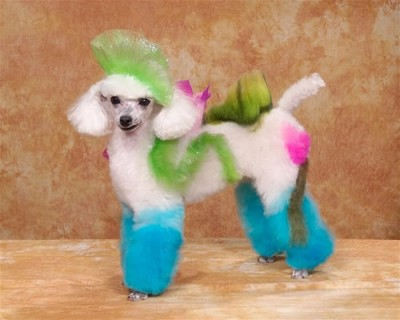 crazy dog grooming (12)