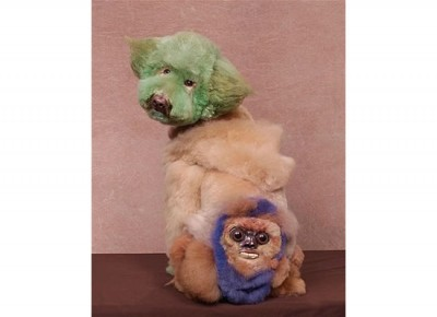 crazy dog grooming (15)